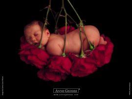 Papel de parede Bebê nas Rosas – Anne Geddes