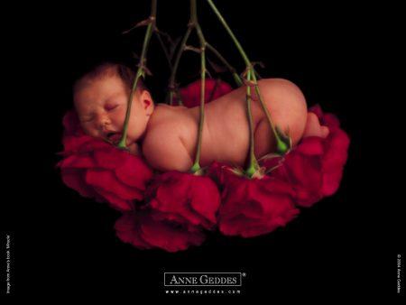 Papel de parede Bebê nas Rosas – Anne Geddes para download gratuito. Use no computador pc, mac, macbook, celular, smartphone, iPhone, onde quiser!