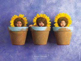 Papel de parede Bebês Girassol – Anne Geddes