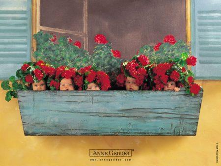Papel de parede Bebês na Floreira – Anne Geddes para download gratuito. Use no computador pc, mac, macbook, celular, smartphone, iPhone, onde quiser!