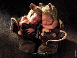 Papel de parede Bebês Rato – Anne Geddes