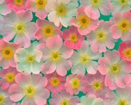Papel de parede Belas Flores