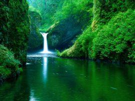 Papel de parede Beleza Verde