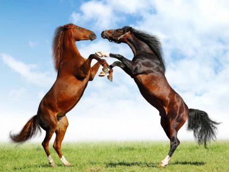 Papel de parede Belos cavalos no campo para download gratuito. Use no computador pc, mac, macbook, celular, smartphone, iPhone, onde quiser!