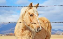 Papel de parede Belíssimo Cavalo Bege