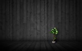 Papel de parede Bonsai Num Quarto Escuro