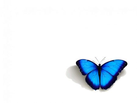Papel de parede Borboleta – Azul para download gratuito. Use no computador pc, mac, macbook, celular, smartphone, iPhone, onde quiser!