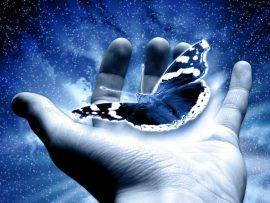 Papel de parede Borboleta – Nas Mãos