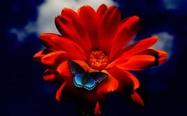 Papel de parede Borboleta na Flor Laranja