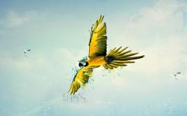 Papel de parede Arara Verde Amarela: Nascido para Voar