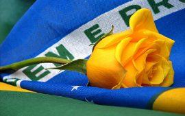 Papel de parede Brasil – Bandeira e Rosa
