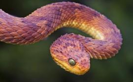 Papel de parede Serpente Armando o Bote