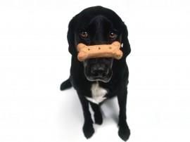 Papel de parede Cão Treinado