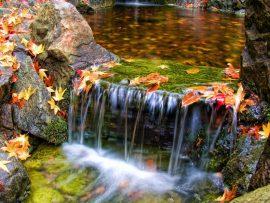 Papel de parede Cachoeira com folhas