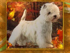 Papel de parede Cachorro branco #3