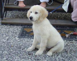 Papel de parede Cachorro Branco