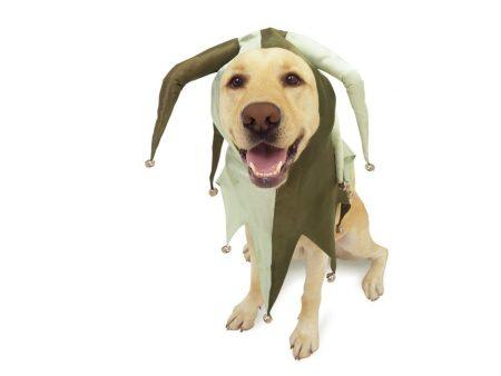 Papel de parede Cachorro Fantasiado para download gratuito. Use no computador pc, mac, macbook, celular, smartphone, iPhone, onde quiser!
