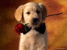 Papel de parede Cachorro romântico
