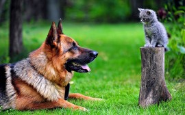 Papel de parede Cachorro e Gato