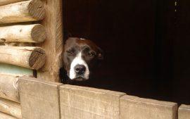 Papel de parede Cão Pensando