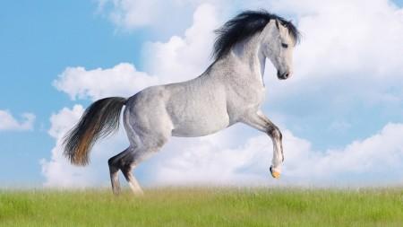 Papel de parede Cavalo Branco de Crina Preta para download gratuito. Use no computador pc, mac, macbook, celular, smartphone, iPhone, onde quiser!