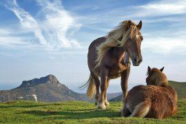 Papel de parede Cavalos na montanha