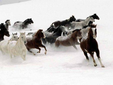 Papel de parede Cavalos para download gratuito. Use no computador pc, mac, macbook, celular, smartphone, iPhone, onde quiser!