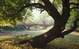 Papel de parede Central Park – Nova York