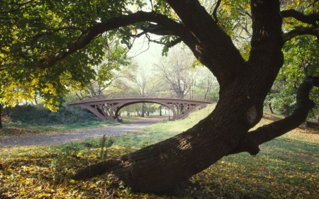 Papel de parede Central Park – Nova York para download gratuito. Use no computador pc, mac, macbook, celular, smartphone, iPhone, onde quiser!