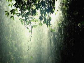 Papel de parede Chuva na Árvore