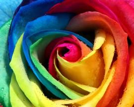 Papel de parede Rosa Arco-Íris