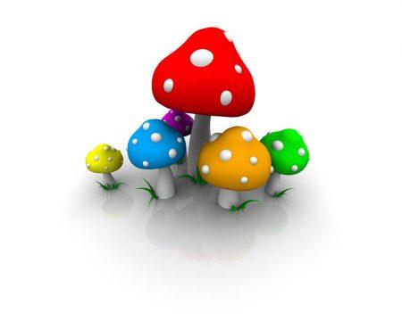 Papel de parede Colorido – Cogumelos para download gratuito. Use no computador pc, mac, macbook, celular, smartphone, iPhone, onde quiser!