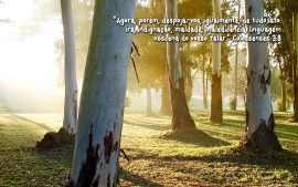 Papel de parede Colossenses 3:8