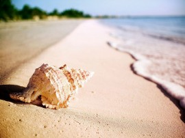 Papel de parede Concha na Beira da Praia