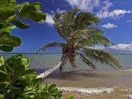 Papel de parede Coqueiro no Hawaii