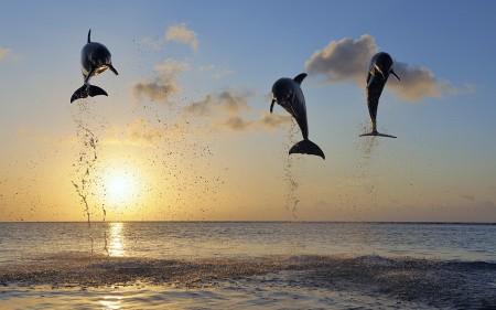 Papel de parede Família de Golfinhos Saltando para download gratuito. Use no computador pc, mac, macbook, celular, smartphone, iPhone, onde quiser!