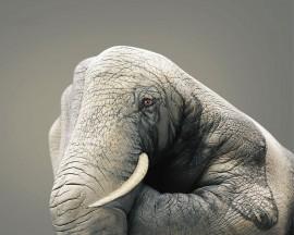 Papel de parede Elefante Pintado na Mão