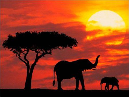 Papel de parede Elefante para download gratuito. Use no computador pc, mac, macbook, celular, smartphone, iPhone, onde quiser!