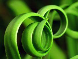 Papel de parede Espirais verdes naturais