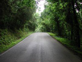 Papel de parede Estrada e Floresta