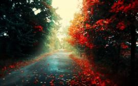 Papel de parede Estrada Com Folhas no Outono