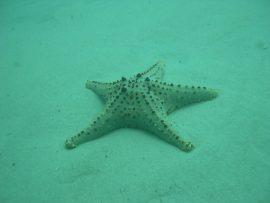 Papel de parede Estrela do mar 2