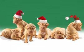 Papel de parede Filhotes de Natal