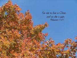 Papel de parede Filipenses 1:21