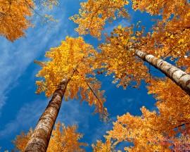 Papel de parede Bom Outono