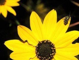 Papel de parede Flor Amarela