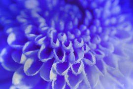 Papel de parede Flor Azul