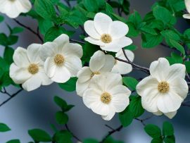 Papel de parede Flor do pacífico