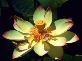 Papel de parede Flor Exótica