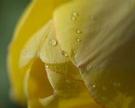 Papel de parede Flor molhada